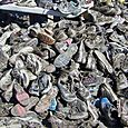 shoe pile at dirty girl
