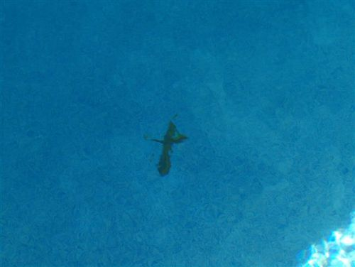 palm cross in bottom of pool - amen!